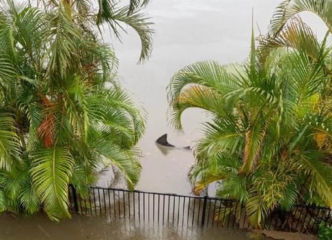 一尾鯊魚因水災游進市區、跑到民宅後院。(翻攝Timothee Morrison Dufour臉書)
