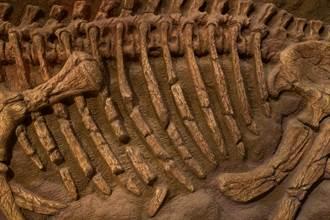 6600萬年前哺乳動物出土 詭異構造專家驚:來自外太空