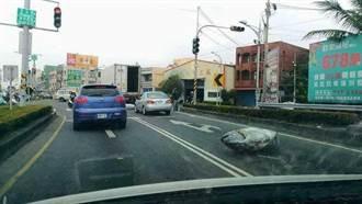 超大鮪魚跳車躺馬路 網激動:一隻百萬還不快撿