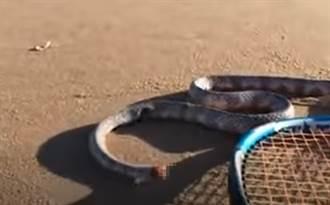 被斷頭還能活!無頭蛇驚悚扭動他嚇壞:會追人