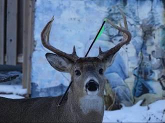 小鹿慘遭「一箭穿頭」仍相信人類 暖心反應引爆淚海