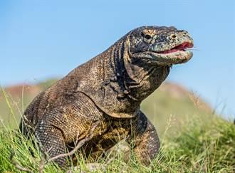 砸2億打造真實版《侏儸紀公園》 印男身體多處竟慘遭園內巨蜥咬斷