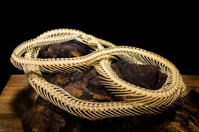 這具在德國發現的蟒蛇化石,刷新了目前世界上「最古老蟒蛇化石」的紀錄。(示意圖/達志影像)