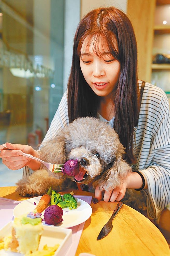 杭州一家專為寵物開設的咖啡店,一位顧客給自家寵物狗餵食。(中新社資料照片)