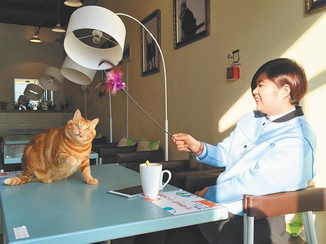 哈爾濱一家主題餐廳,專門為寵物準備了就餐區。(中新社資料照片)