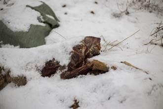 史上保存最完好幼狼出土 揭5.7萬年前最後一餐