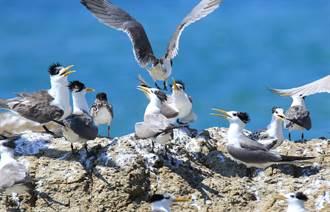 台灣首份鳥類國家報告 鳥類觀察資料累計逾820萬筆