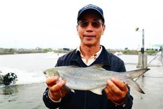 漁電共生「屏東先行區」出爐 養殖戶更期盼試驗成果