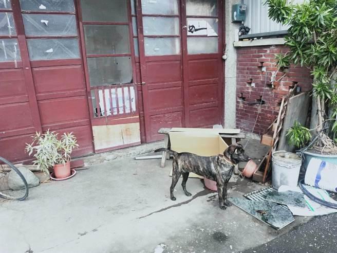 這隻土狗「愛愛」狂吠救了阿公一命。(玉里警分局提供/王志偉花蓮傳真)