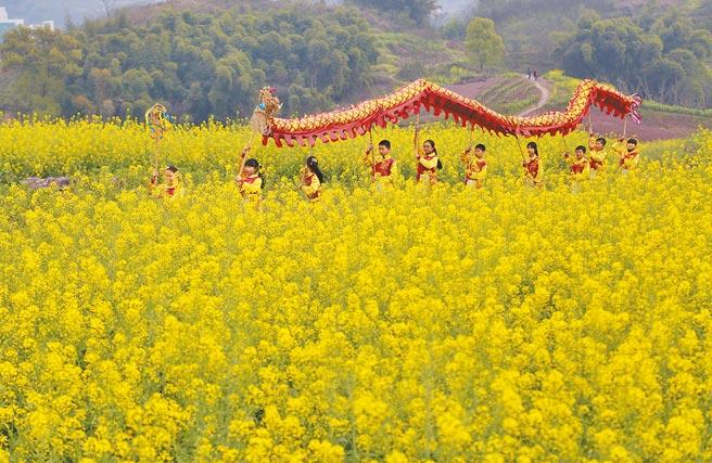 重慶市北碚區狀元小學的學生在油菜花叢中舞動「蔡家草把龍」。(新華社)