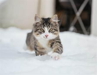 貓主子想翹家玩雪 伸毛掌「印超萌肉球」秒後悔