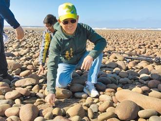 棲地海砂驟減 海瓜子加強復育