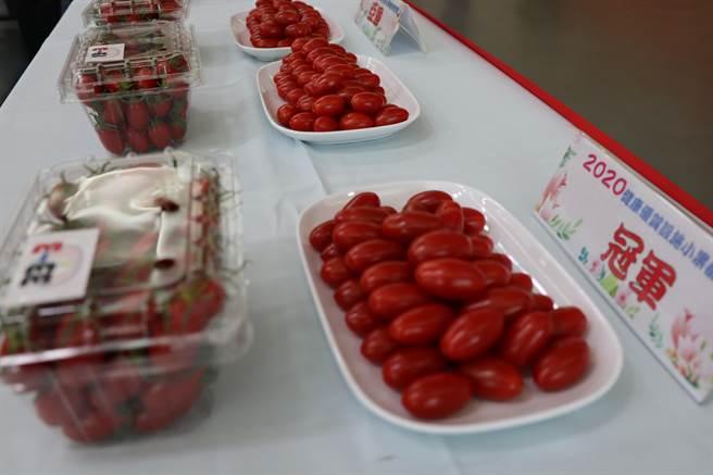 一年一度的全國小果番茄競賽,23日於農委會台南區農業改良場舉行決賽,由嘉義縣民雄鄉農友徐立晨奪冠。(劉秀芬攝)