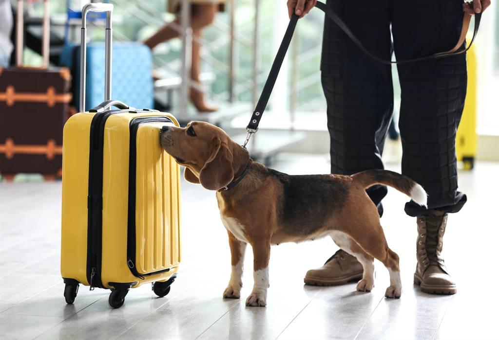 美國偵爆犬TTirado在今年5月底榮退,牠的領犬員近日也被選為「2020年度最佳領犬員」。(示意圖/達志影像)
