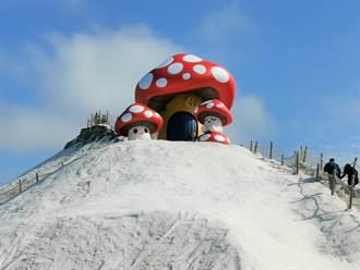 七股鹽山6米巨大蘑菇亮相 黃偉哲讚「Good」好兆頭
