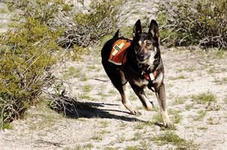 7年好友訓練員離開 搜救犬不捨追車1公里求留下