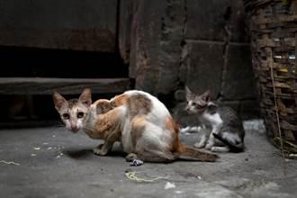 流浪貓討到肉卻不肯吃 跟蹤牠目擊心酸一幕淚崩