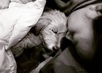 10年前救回險被安樂死的牠 李孝利道別愛犬:在懷裡安詳離開