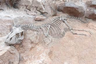 散步发现顏色诡异石块 一看竟是1.6亿年前恐龙化石