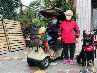 警犬耶誕變裝與長輩做互動訓練 讓人直呼:金厲害!