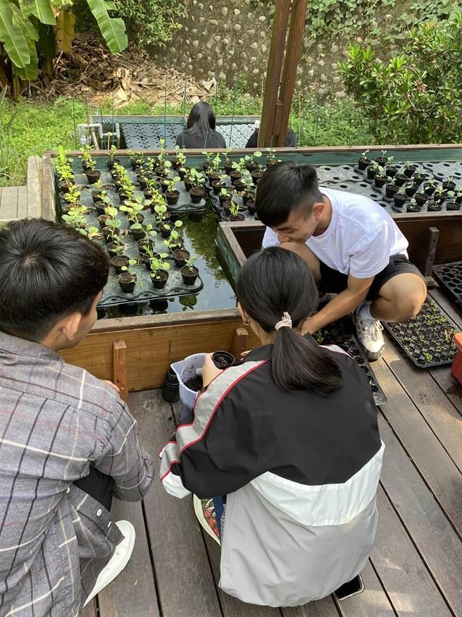 朝陽科大師生在校園內打造「永續可食實驗室」,採用輕觸大地的生態設計,發展微型「魚菜共生」的耕養共生種植模式。(朝陽科大提供/林欣儀台中傳真)