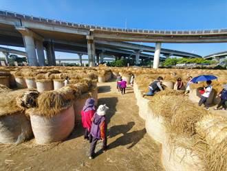 雲林大埤鄉稻草迷宮意外吸引數千人 展期延長到農曆過年