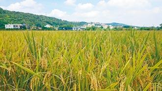 稻作停灌延後公布 打亂農民計畫