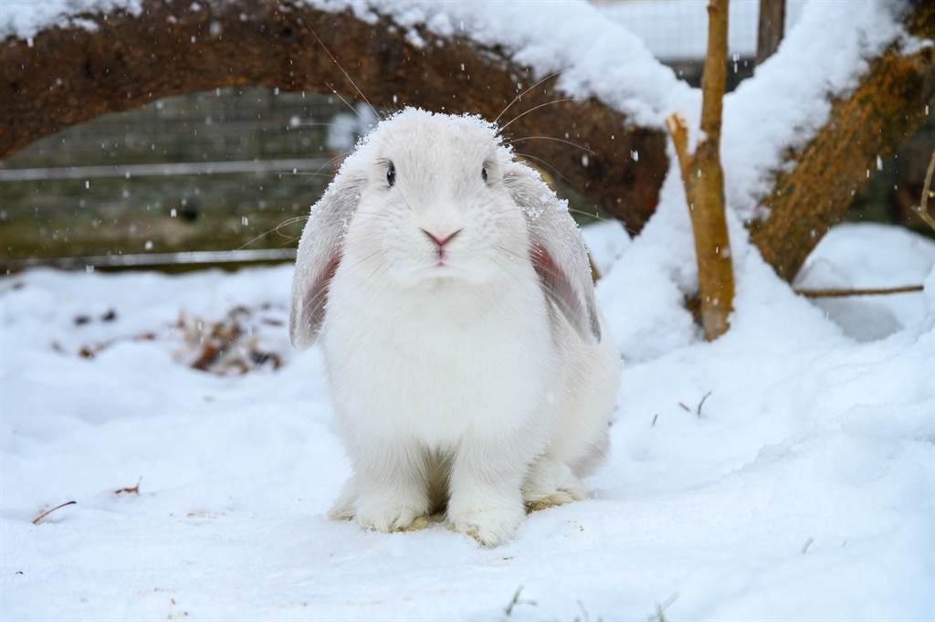 小白兔看似在親吻雪人,其實是在啃咬紅蘿蔔鼻子,讓溫馨畫面瞬間變卦。(示意圖/達志影像)