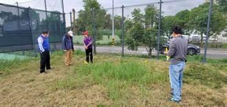 紅火蟻入侵校園 土城國小周邊出現10多處蟻穴