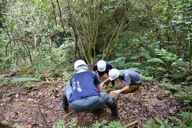 千里步道協會與荒野保護協會新竹分會志工,協力修復石峎步道的部分路段。(莊旻靜攝)