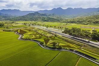縱谷彩稻藝術季豐收園遊會 明年1月來抱稻