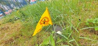 新北紅火蟻入侵球場 驚見10多處蟻穴