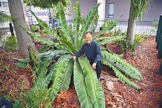 清華百蕨園 保育珍稀瀕危蕨類