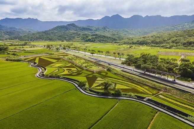 花東縱谷國家風景區明年1月將舉辦「豐收採稻園遊會」,開放民眾進入割稻,享受稻子成熟的喜悅。 (縱管處提供/羅亦晽花蓮傳真)
