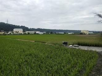 水情惡化燈號轉橘 台中2萬公頃一期稻停灌