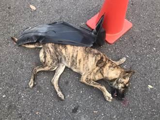 惡劣司機撞死毛孩逃逸 愛狗人士全程目擊