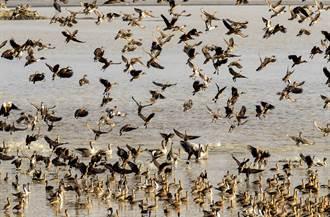 影》美數百萬鳥一月內離奇暴斃 死前現詭異舉動