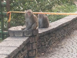 台東遊客注意 餵食獼猴最高罰1萬元