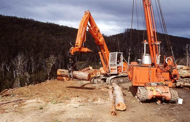 塔斯馬尼亞州木材業者在中國對澳貿易管制中受創甚深。(達志影像shutterstock)