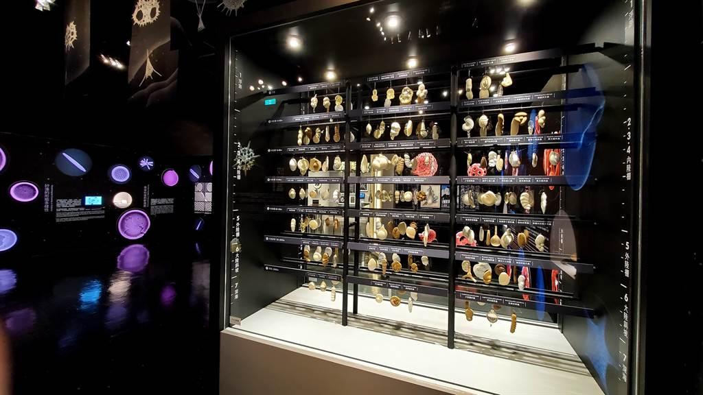 《微美幻境–海洋微化石》特展,展示180餘件有孔蟲放大模型櫥窗展場。(科博館提供/陳淑芬台中傳真)