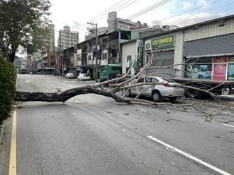 寒流來像颱風 台中驚傳路樹倒、鷹架塌