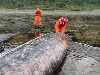 蘭嶼五孔洞鯨豚擱淺 初判疑柯氏喙鯨 已明顯死亡