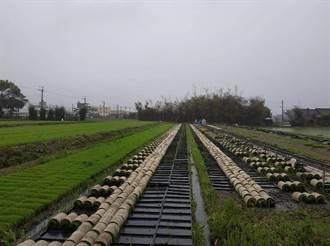 農委會公告台中明年一期稻作停灌 明年1/7起受理申請