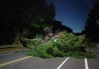 超狂霸王寒流比颱風猛 彰化市寶山路大榕樹應聲而倒