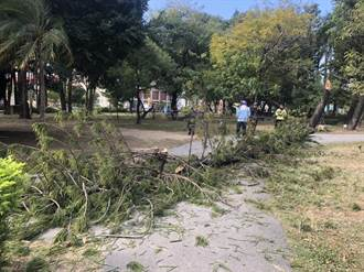 公園上完廁所被倒樹擊中 邱男遭壓傷獲國賠