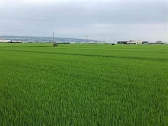 農委會公告台中明年一期稻作停灌 明年1月7日起受理補償申請
