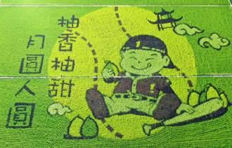 明年一期稻作停灌 苑裡彩繪稻田取井水備戰