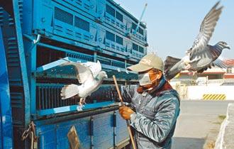 賽鴿食品宣稱療效 挨罰20萬