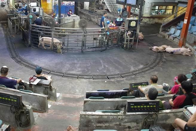 萊豬進口前夕,雲林縣肉品市場豬價平穩,短時間內不至於下跌。(張朝欣攝)