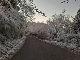 太平山-5°C霧淞結霜 夢幻銀白仙境照曝光